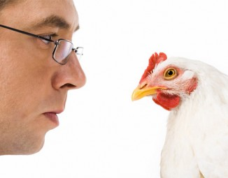 Insurance agent vs chicken